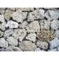 天然珊瑚石