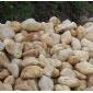 山东鹅卵石、山东天然鹅卵石、山东省鹅卵石厂