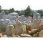 英石、黄皮水石、太湖石、刻字石、鹅卵石