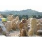 大发棋牌:黄蜡石、英石、黄皮水石、太湖石、刻字石、鹅卵石、花雨石、青石、海浪石、千层石、文化石