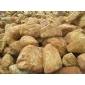 草地驳岸黄腊石80-1米2