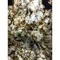 天然石材中的珍稀品种
