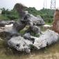 新品上市批发园林太湖石,园林黄腊石,园林景观石,批发园林石,台面石,溪流石,驳岸石