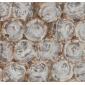 树化石大理石复合板