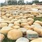 广东黄蜡石厂家直销、黄腊石产地批发平面石、草地台面石