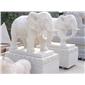 汉白玉大象 大象雕刻 石雕象 招财象  动物雕塑