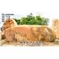 四川天然景观黄蜡石 纪念刻字黄蜡石 招牌刻字风景石