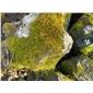 江西黑山石,四合景观野山石