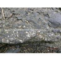 待开发的海贝花岩石