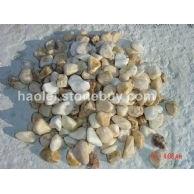 豆 黄鹅卵石