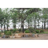 花坛石 树穴石